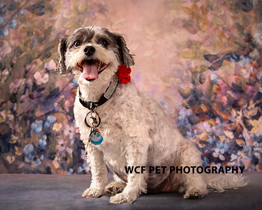 Dog on floral background
